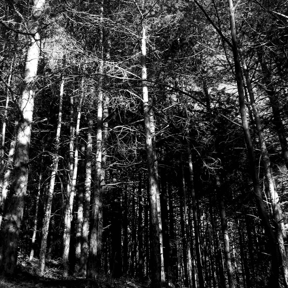 wood_PIC